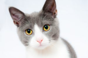 cat-1151519_1280